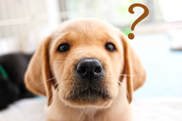 疑問を浮かべる子犬
